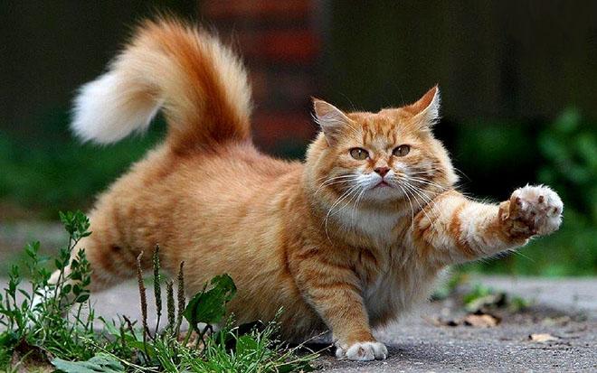 Giải mã nằm mơ thấy mèo báo hiệu điều gì