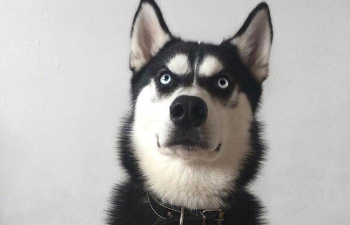 mơ thấy chó điềm báo gì