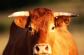 Mơ thấy con bò đánh con số kqxsmb nào chuẩn nhất