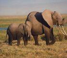 Mơ thấy con voi là điềm báo gì và con số may mắn