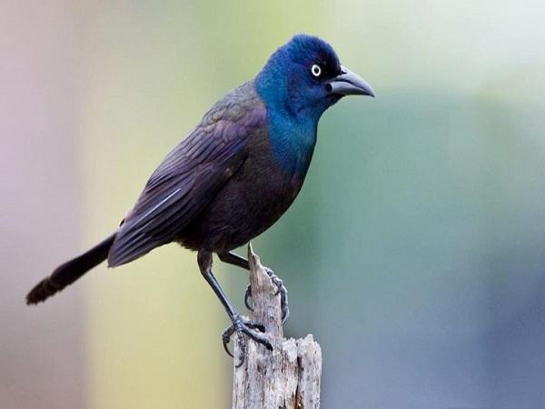 Mơ thấy chim có điềm báo gì? đánh số nào trúng?