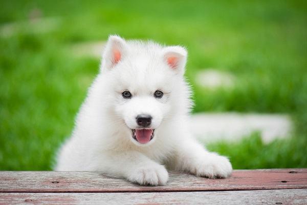 Nằm mơ thấy chó trắng đánh con gì